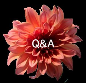 Q&Aボタン